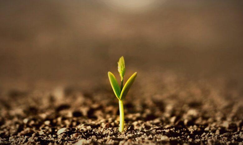 Wyrastająca z ziemi zielona roślinka puszczająca swoje pierwsze listki